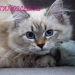 Fibi-TandilloPL