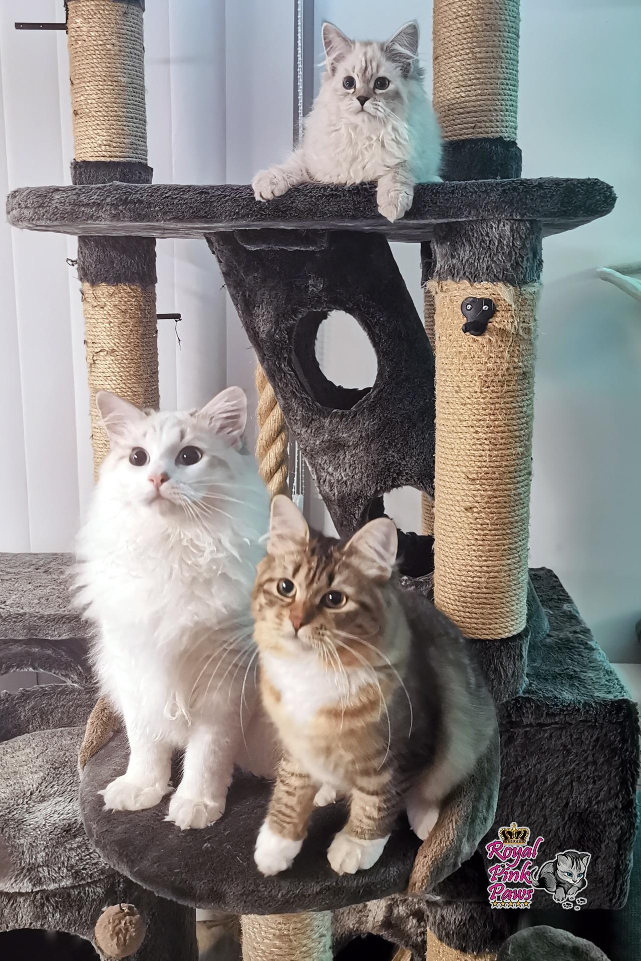 Allgemeines Foto der Cattery