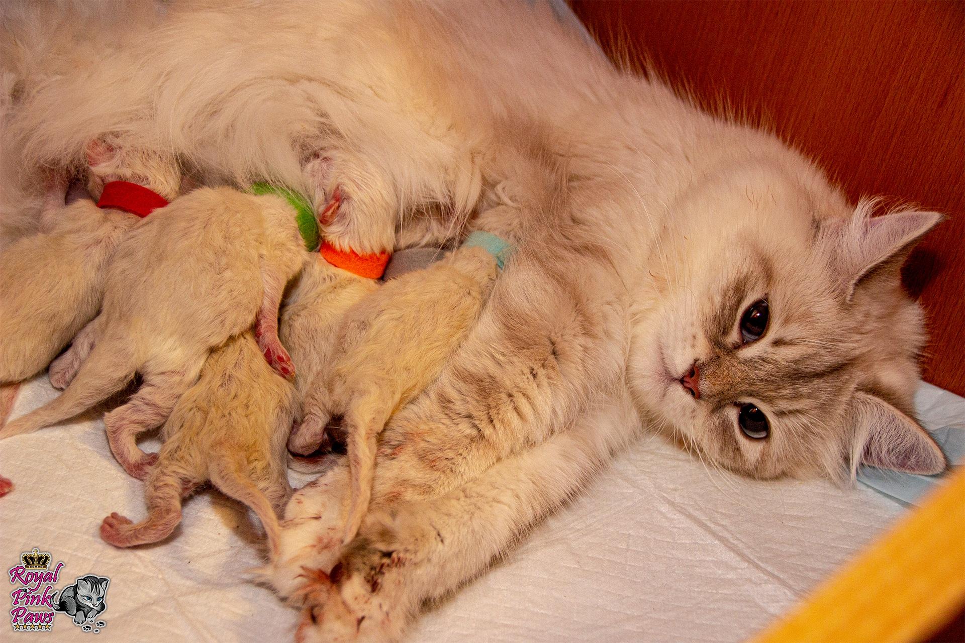 Katzenkindergarten A-Wurf
