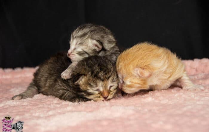 Katzenkindergarten B-Wurf