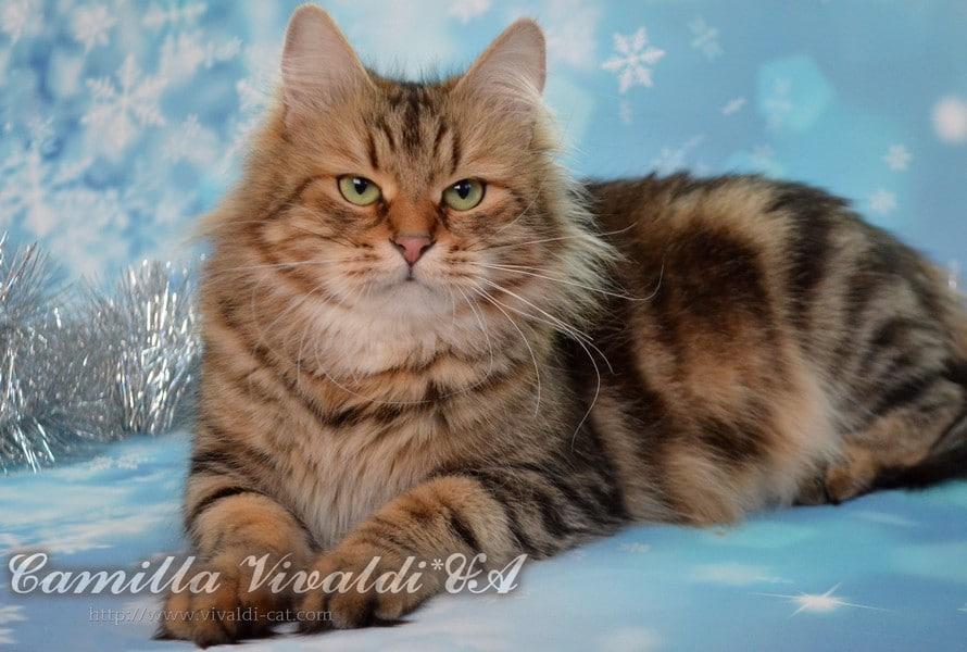 Ch. Camilla Vivaldi UA