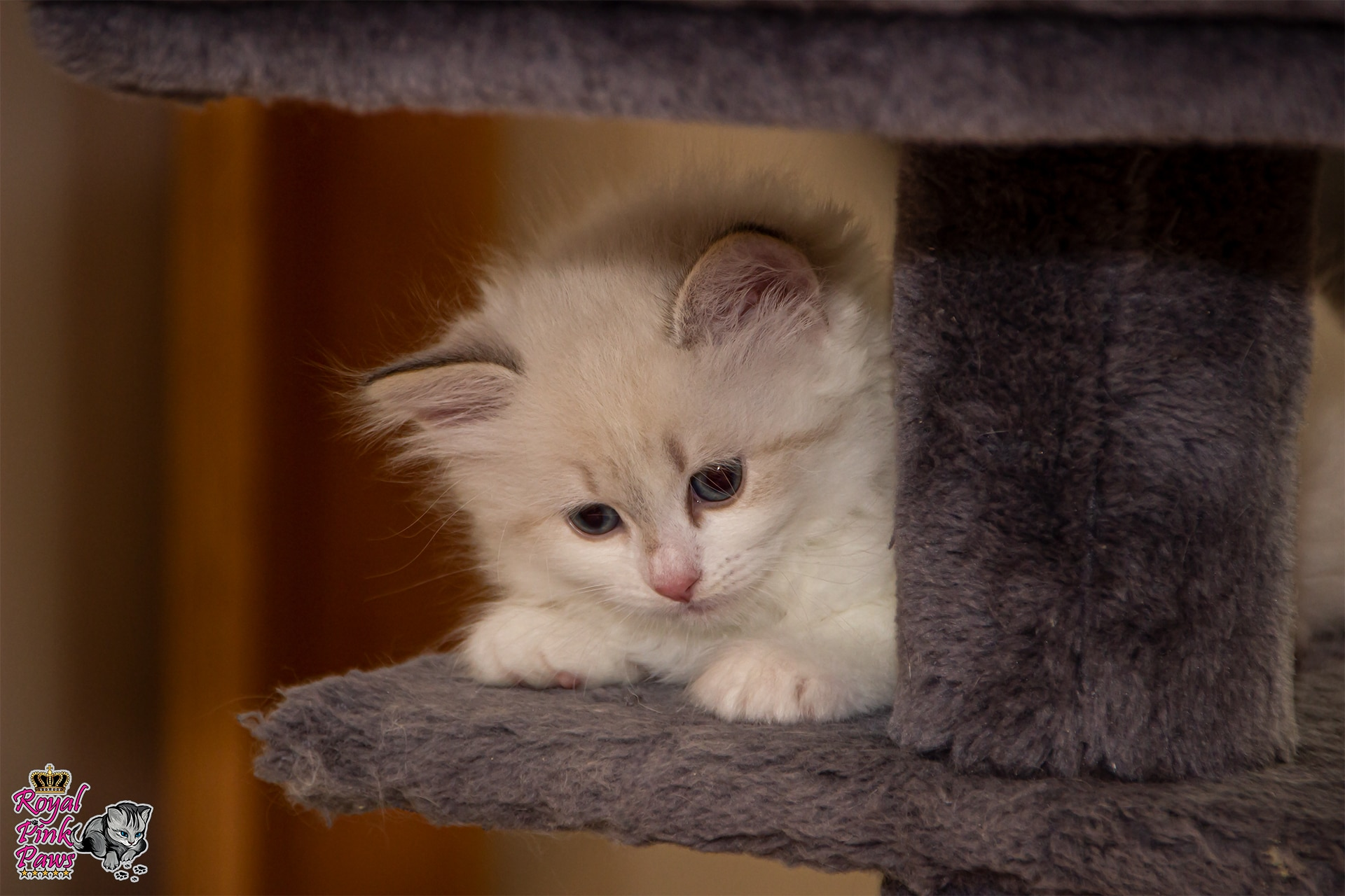 Katzenkindergarten C-Wurf