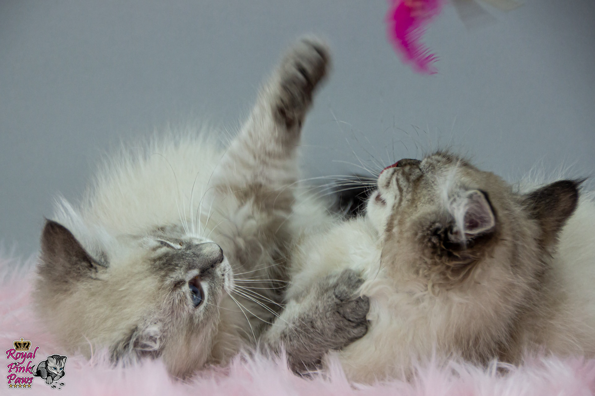 Katzenkindergarten D-Wurf