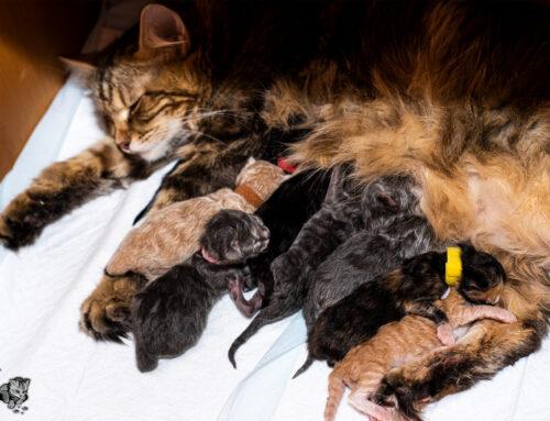 Unsere Kitten vom E-Wurf sind gelandet