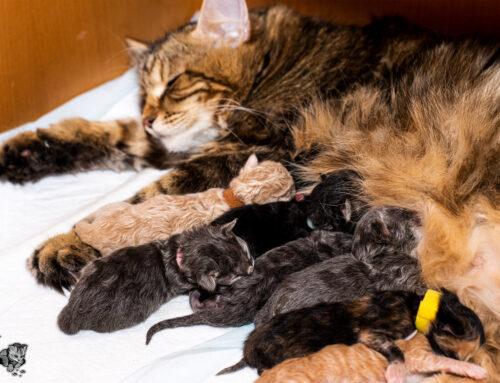 Katzenkindergarten E-Wurf