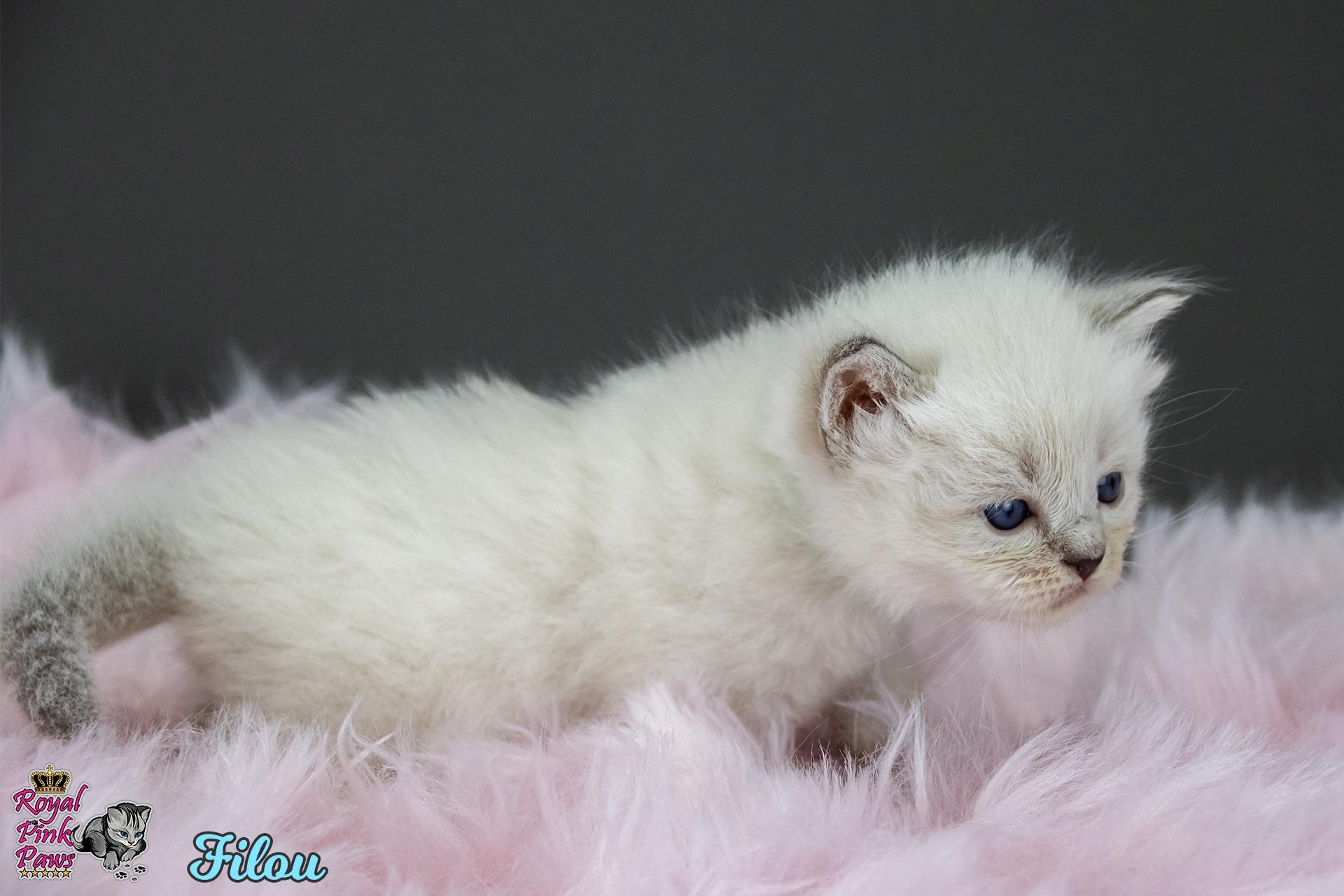 Neva Masquarade - Filou Royal Pink Paws