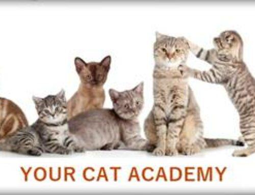 Your Cat Academy Level 1 & 2 erfolgreich bestanden