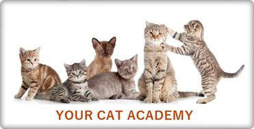 Your Cat Academy Banner